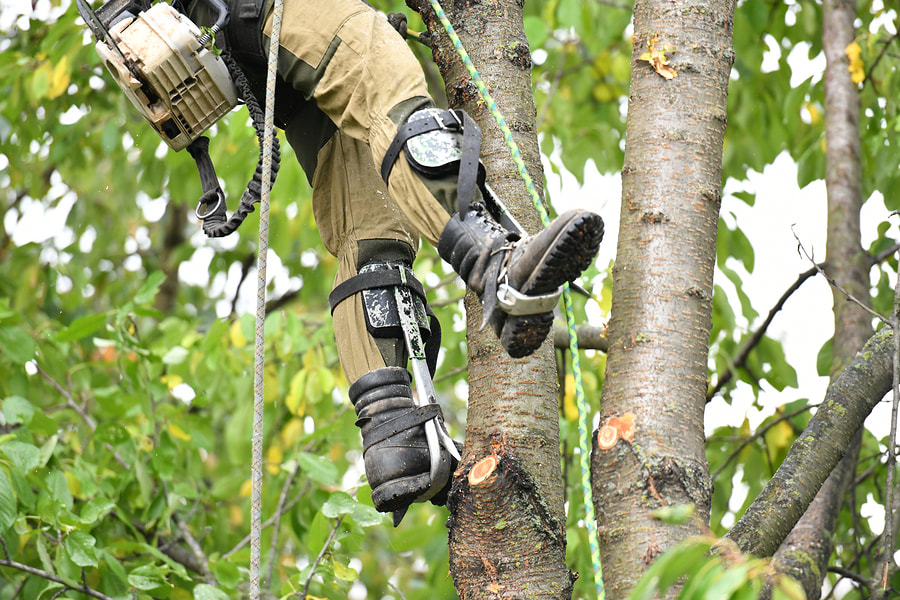 man doing tree cutting while on rope