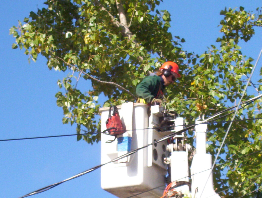 worker tree trimming while on lifter